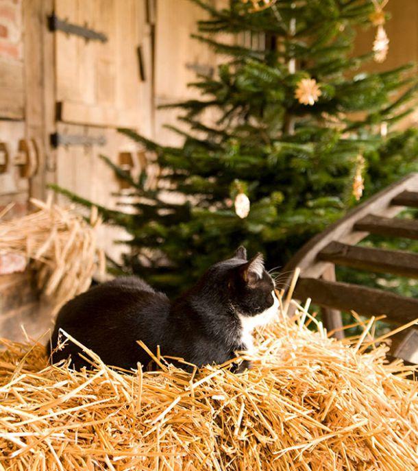 weihnachten der tiere sch ne weihnachten. Black Bedroom Furniture Sets. Home Design Ideas