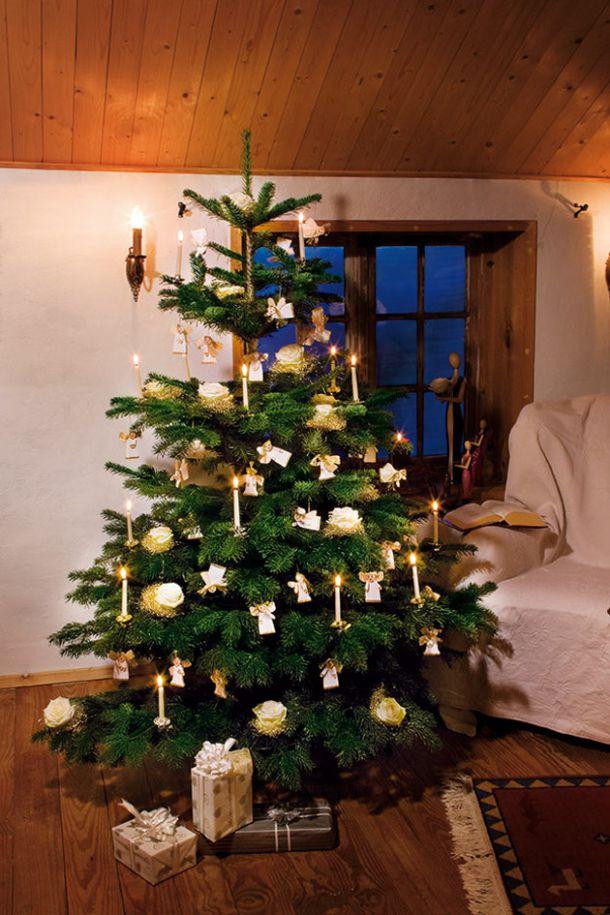 kologisch wertvoll natur christbaum ein gutes gewissen sch ne weihnachten. Black Bedroom Furniture Sets. Home Design Ideas