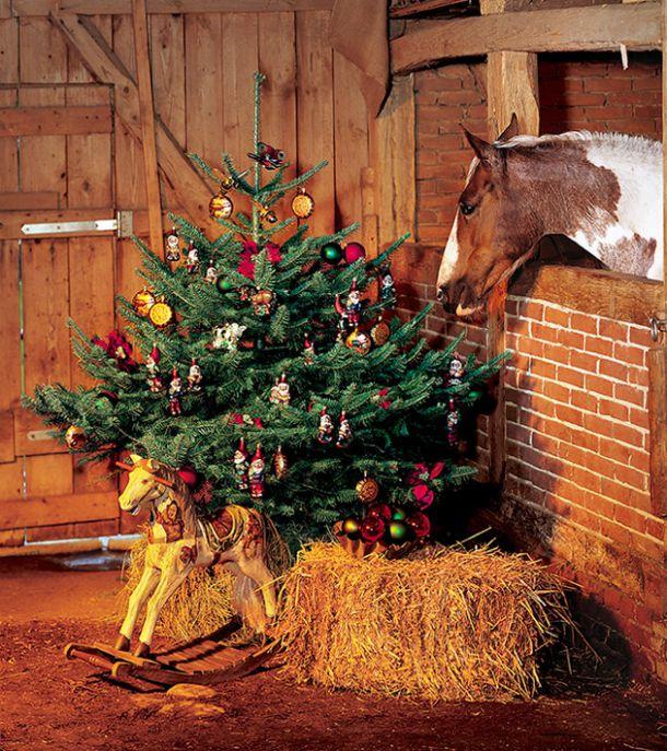Bilder Weihnachten Tiere.Weihnachten Der Tiere Schöne Weihnachten